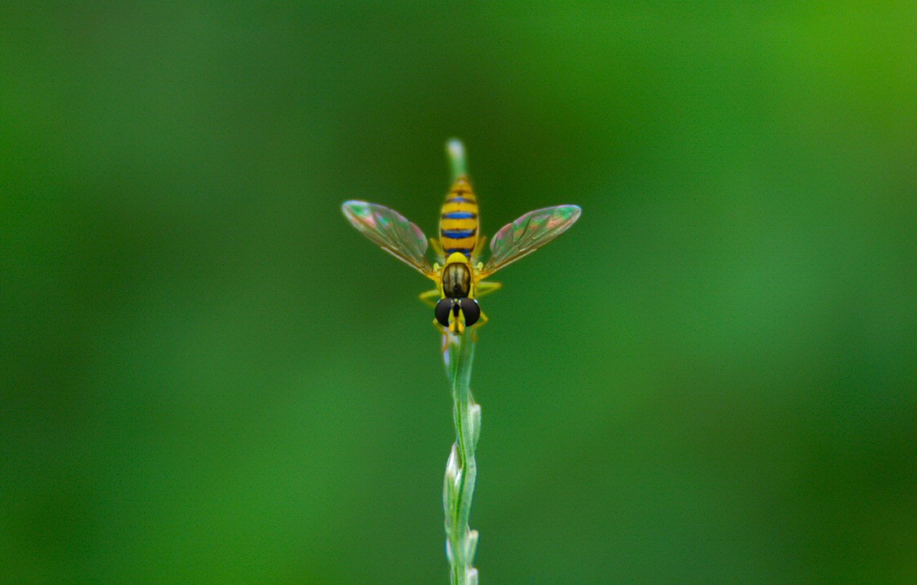 Photo wallpaper fly, plant, Greens