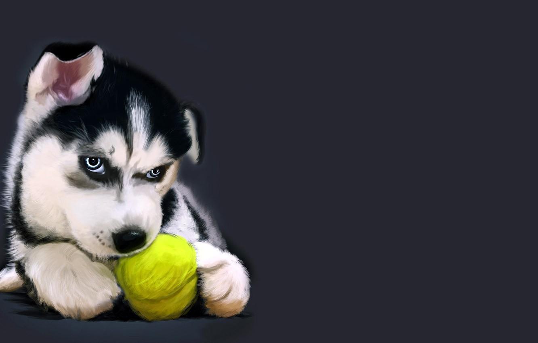 Photo wallpaper figure, puppy, the ball, husky