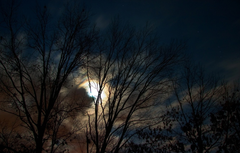 Photo wallpaper trees, night, the moon