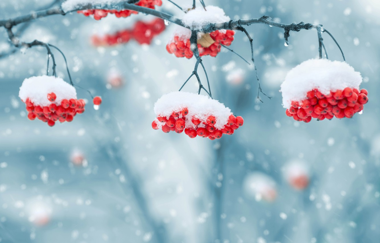 Photo wallpaper winter, snow, snowflakes, nature, berries, background, blur,