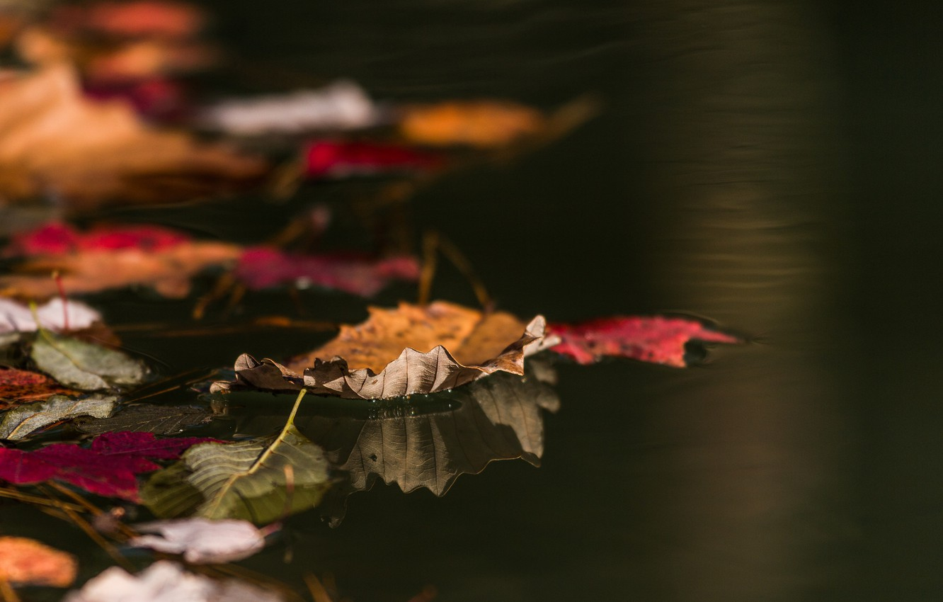 Photo wallpaper autumn, leaves, water, macro