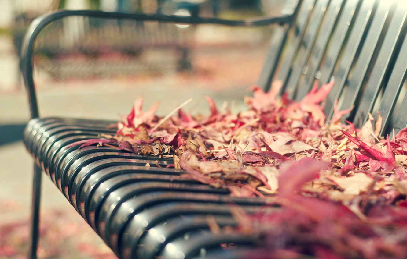 Wallpaper Autumn Leaves Macro Bench Background Widescreen