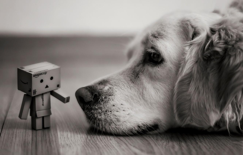 Photo wallpaper look, box, dog, lies, black and white, Danbo, amazon, boxes