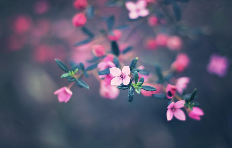 Photo wallpaper flowers, nature, paint, colors, nature, flowers, bokeh, bokeh, 2560x1600