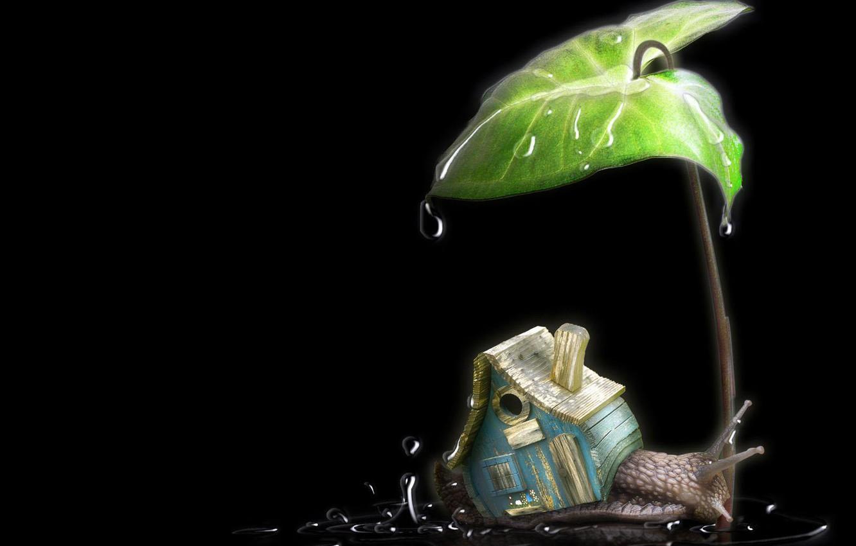 Photo wallpaper the rain, drops, leaf, snail, house