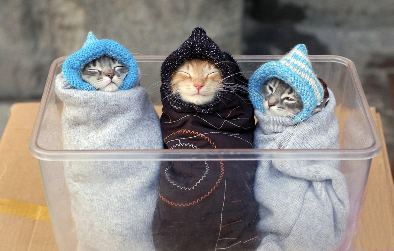 Photo wallpaper animals, box, cats