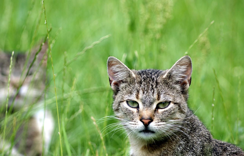 Photo wallpaper greens, cat, cat, look, looks, cat