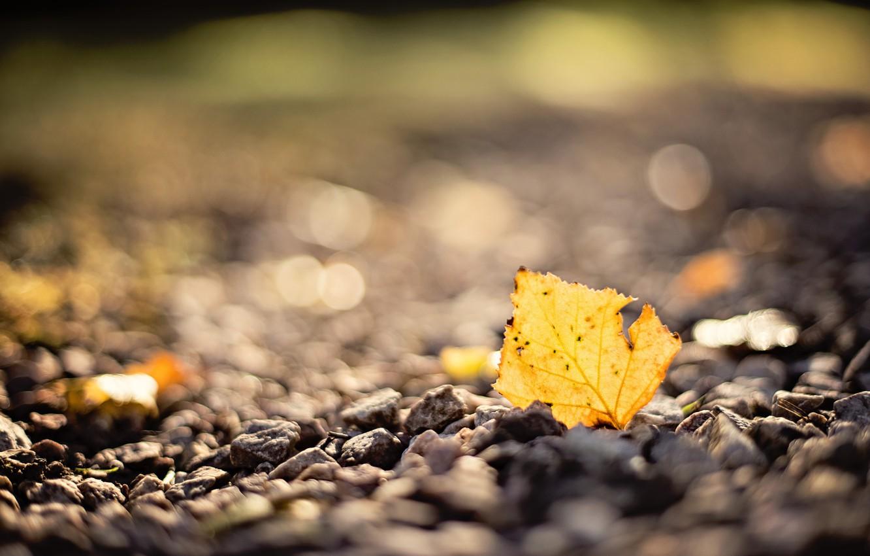 Photo wallpaper autumn, macro, sheet, stones, blur, bokeh