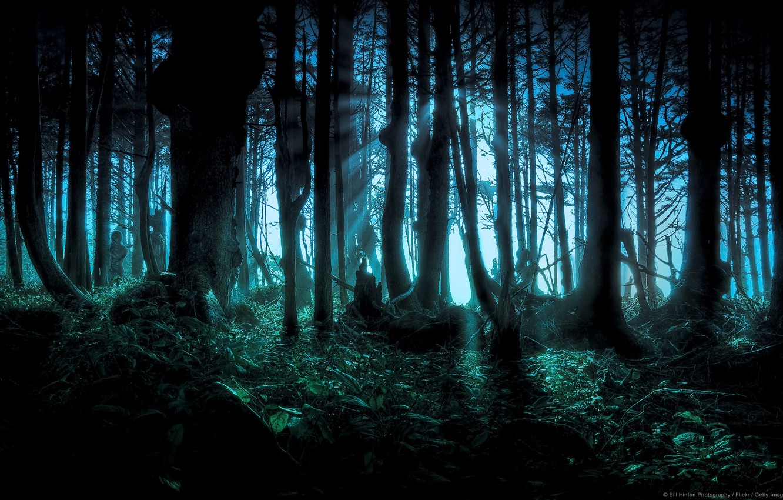 Photo wallpaper Forest, Gudki forest, Dark Forest