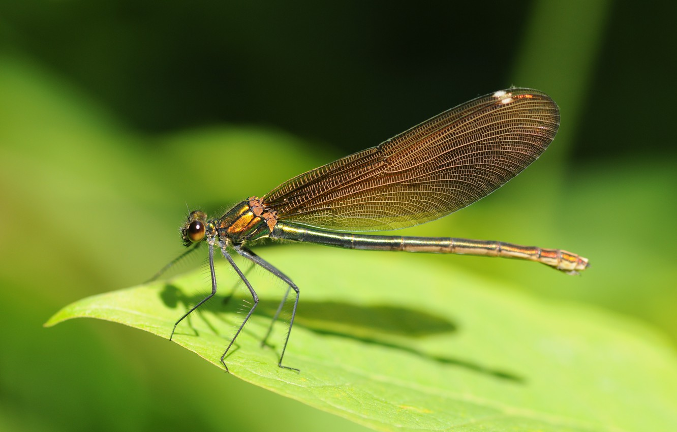 Photo wallpaper sheet, green, dragonfly, Insects