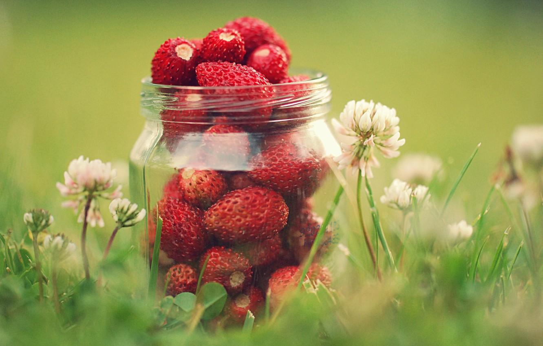 Photo wallpaper greens, summer, grass, macro, flowers, nature, berries, strawberry, clover, jar