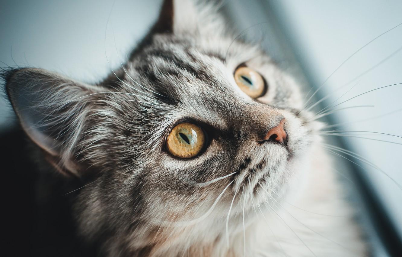 Photo wallpaper cat, cat, wool