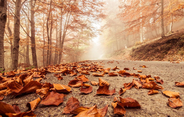 Photo wallpaper autumn, macro, trees, landscape, nature, scene, forest, Misty, forest, trees, landscape, nature, autumn, macro, scene, …