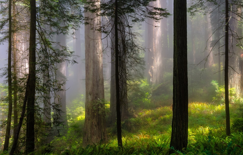 Photo wallpaper forest, summer, trees, landscape, nature, fog