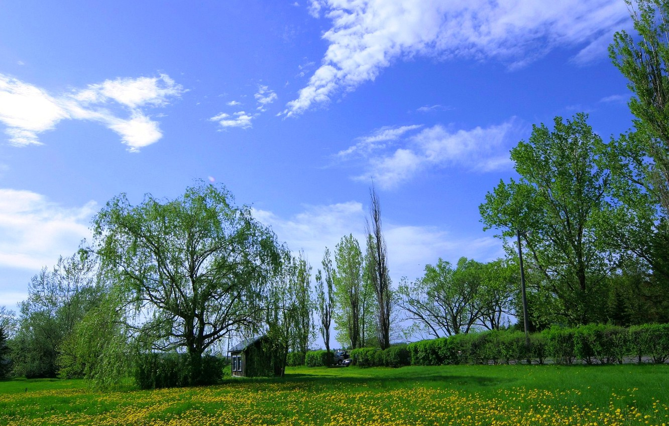 Photo wallpaper the sky, grass, clouds, trees, flowers, meadow, house, dandelions