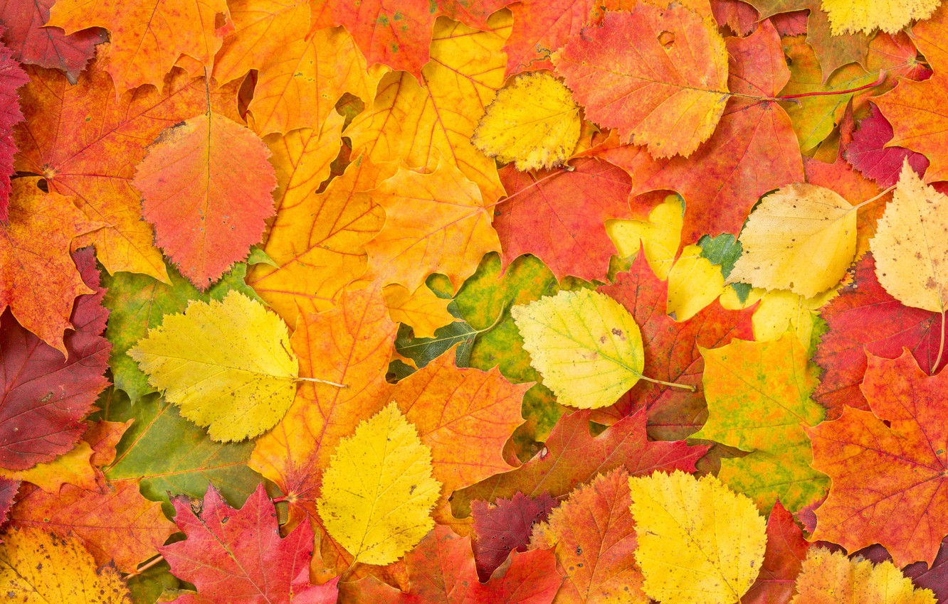 Photo wallpaper background, autumn, leaves, autumn leaves