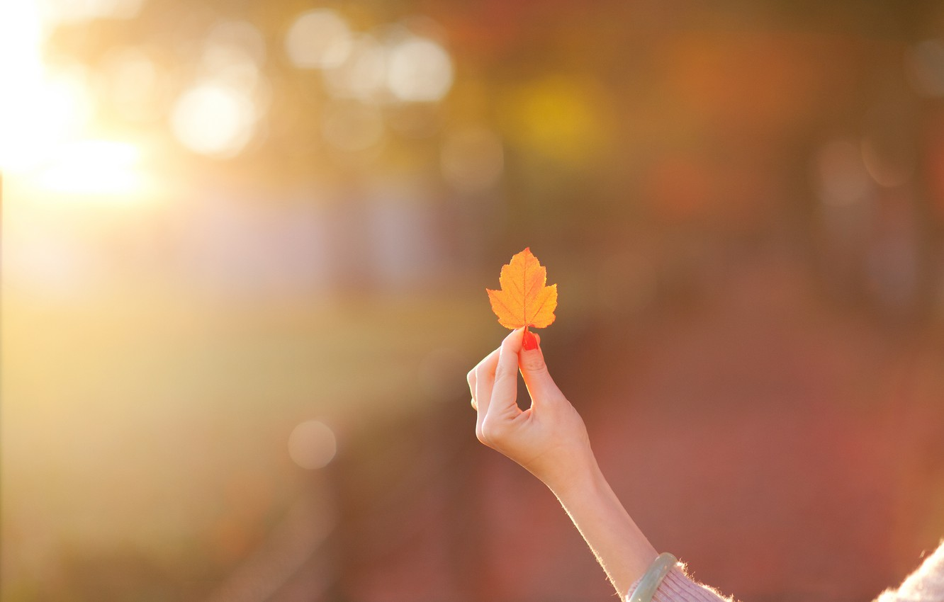 Photo wallpaper girl, background, Wallpaper, mood, hand, blur, leaf, wallpaper, leaf, widescreen, background, full screen, HD wallpapers, …