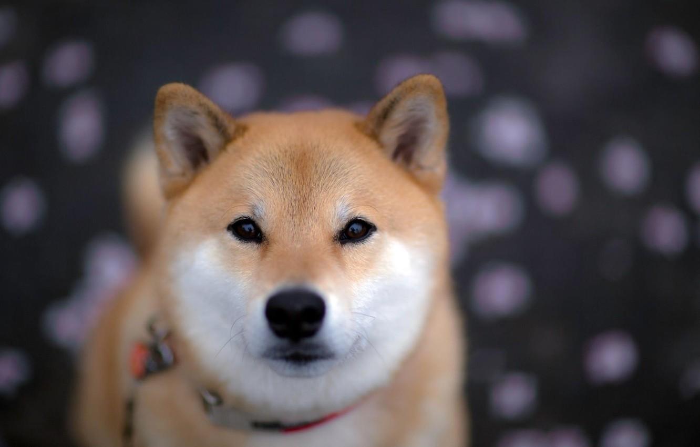 Photo wallpaper look, each, dog, blur