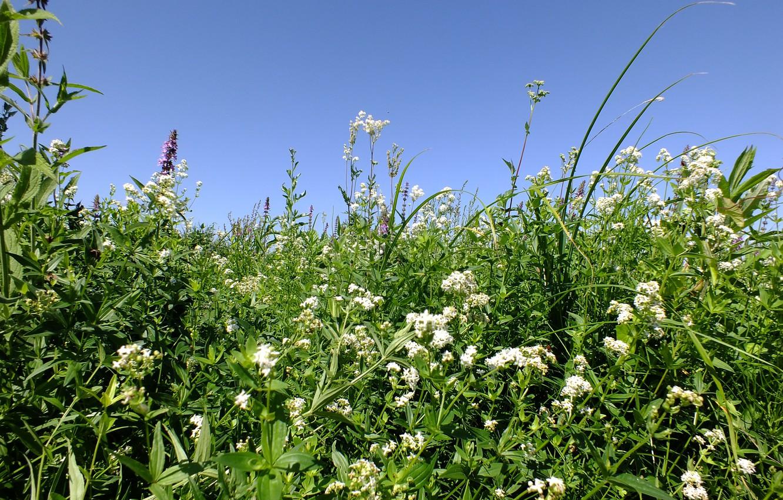 Photo wallpaper field, summer, grass, nature, meadow