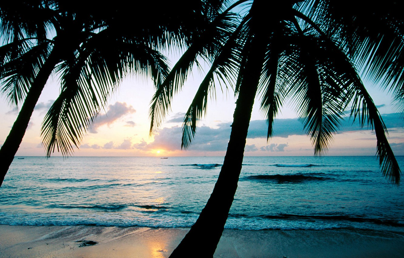 Photo wallpaper sunset, palm trees, the ocean, Barbados, Caribbean, West Indies, king\'s Beach, the island of Barbados