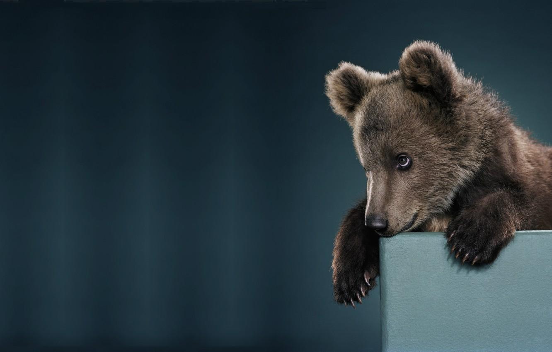Photo wallpaper mood, minimalism, baby, bear, bear