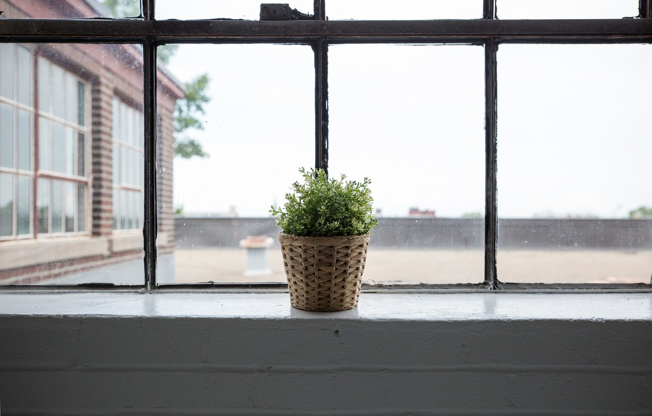 Photo wallpaper plant, window, pot