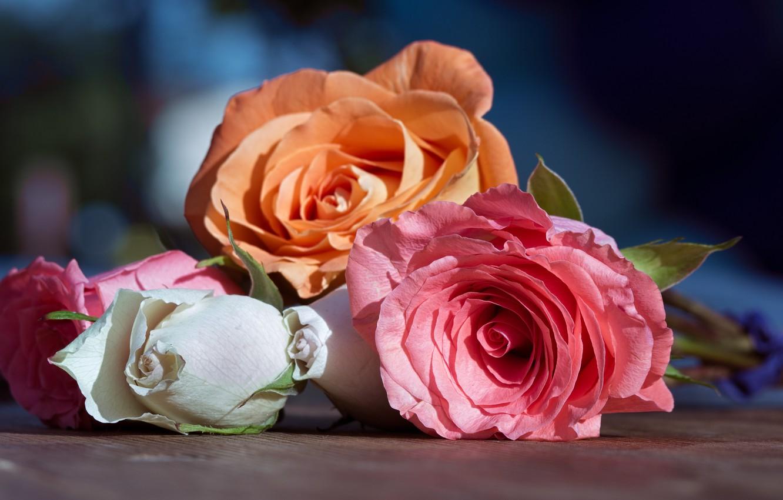 Photo wallpaper macro, roses, buds