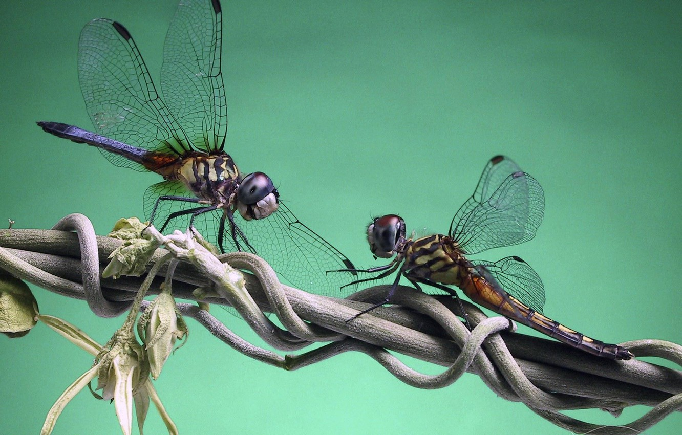 Photo wallpaper branch, dragonfly, eel