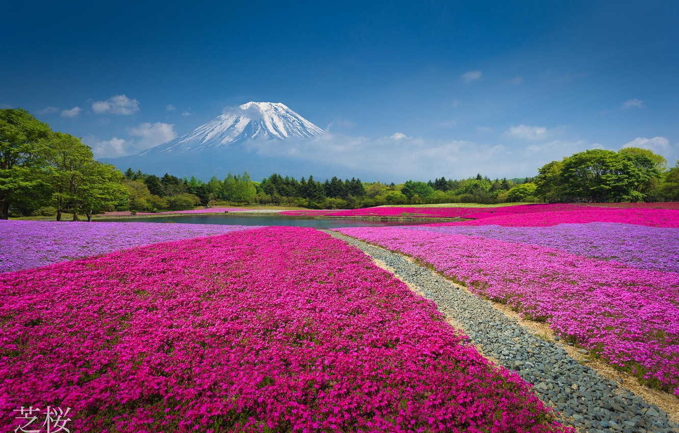 Photo wallpaper forest, flowers, nature, lake, Park, mountain, the volcano, China, flowerbed