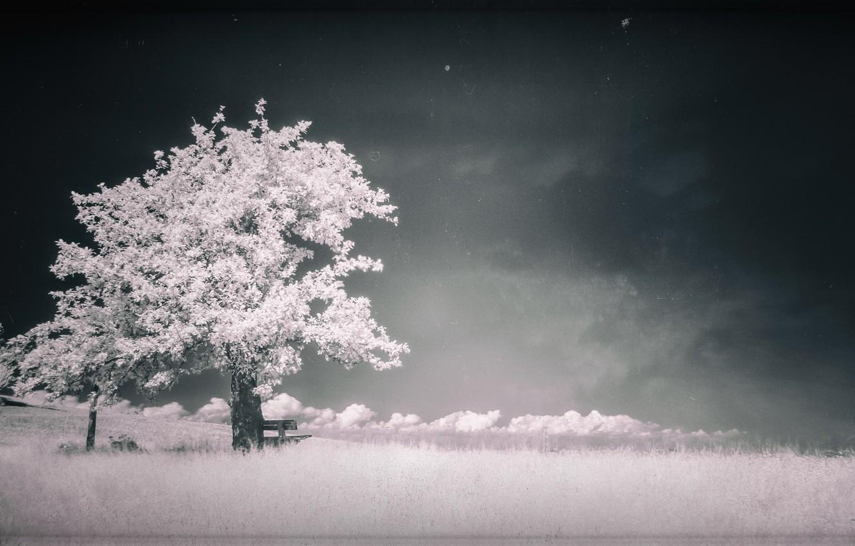 Photo wallpaper landscape, tree, landscape, tree