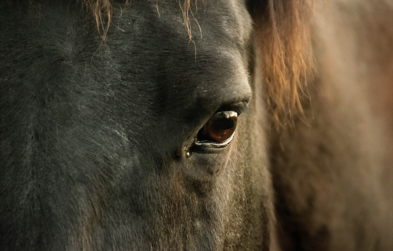 Photo wallpaper macro, eyes, horse