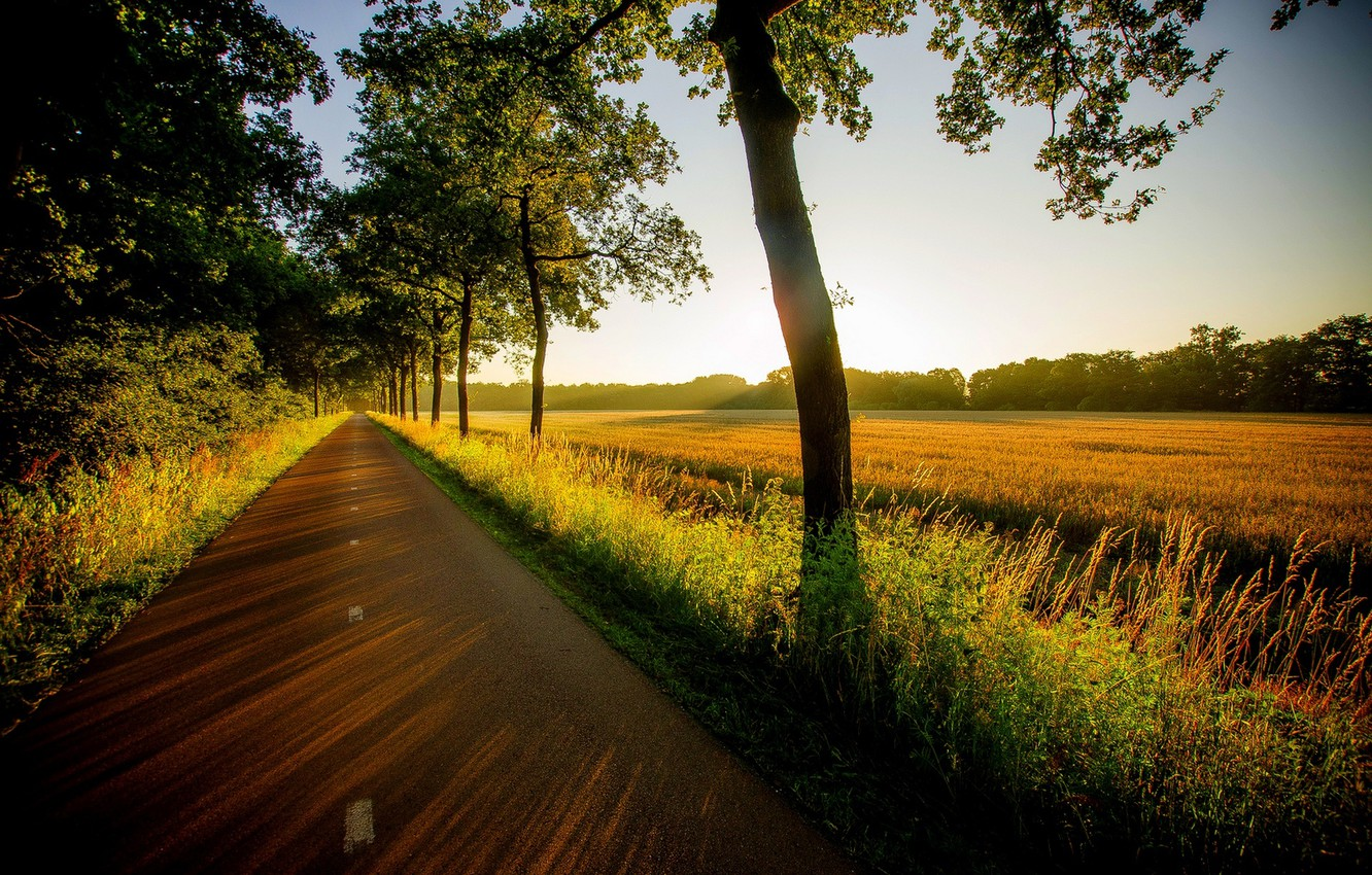 Photo wallpaper road, field, forest, grass, trees, sunset, nature, view, grass, walk, forest, road, trees, field, nature, …