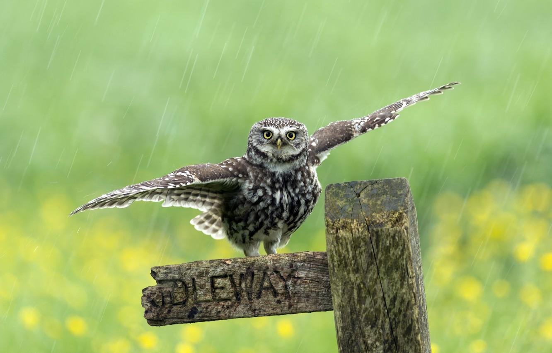 Photo wallpaper rain, bird, the fence