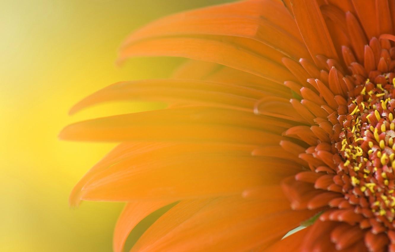 Photo wallpaper flower, yellow, petals