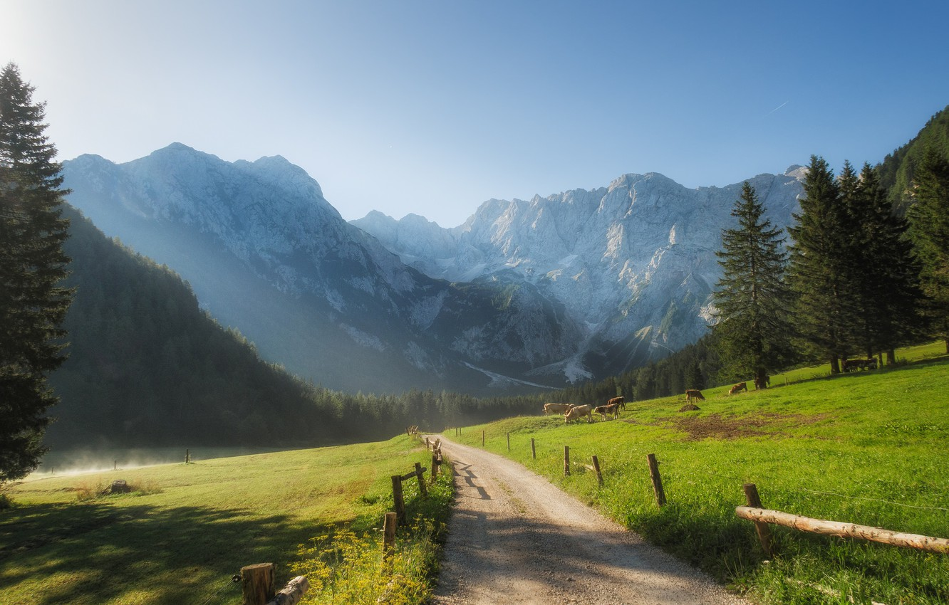Photo wallpaper road, mountains, morning, ate, valley, cows, Slovenia