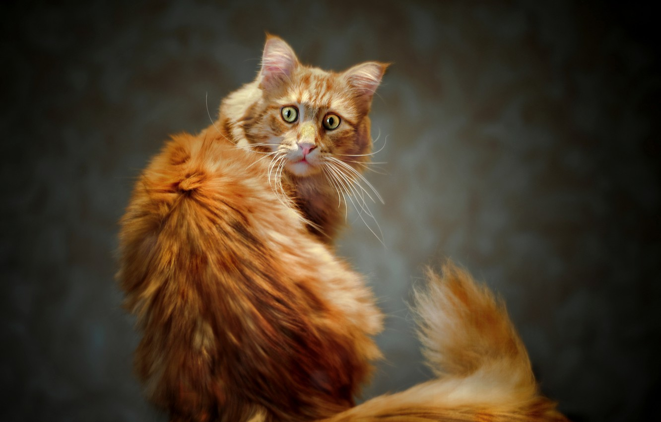 Photo wallpaper eyes, cat, look, red, tail, Kote
