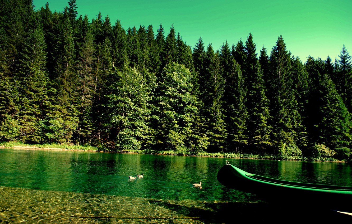 Photo wallpaper forest, nature, river, boat, duck