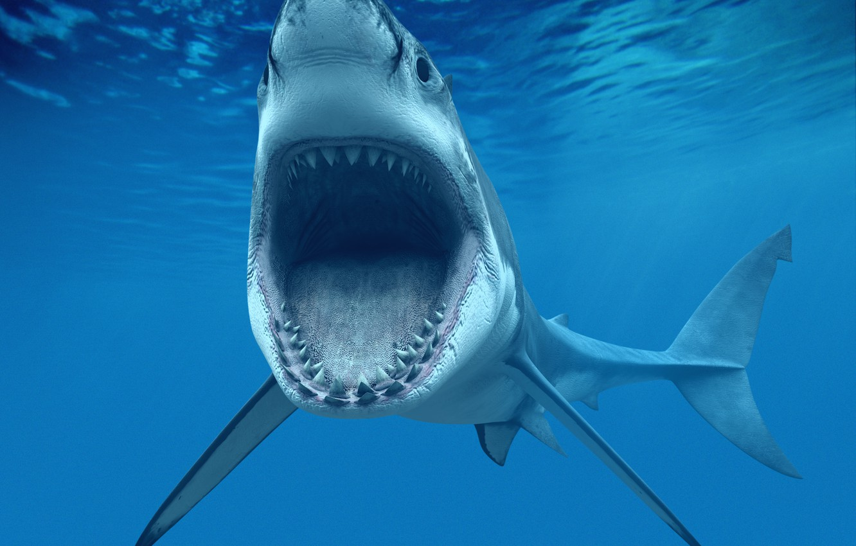 Photo wallpaper jaw, teeth, mouth, White shark, Great White Shark), or carcharodon (Carcharodon carcharias