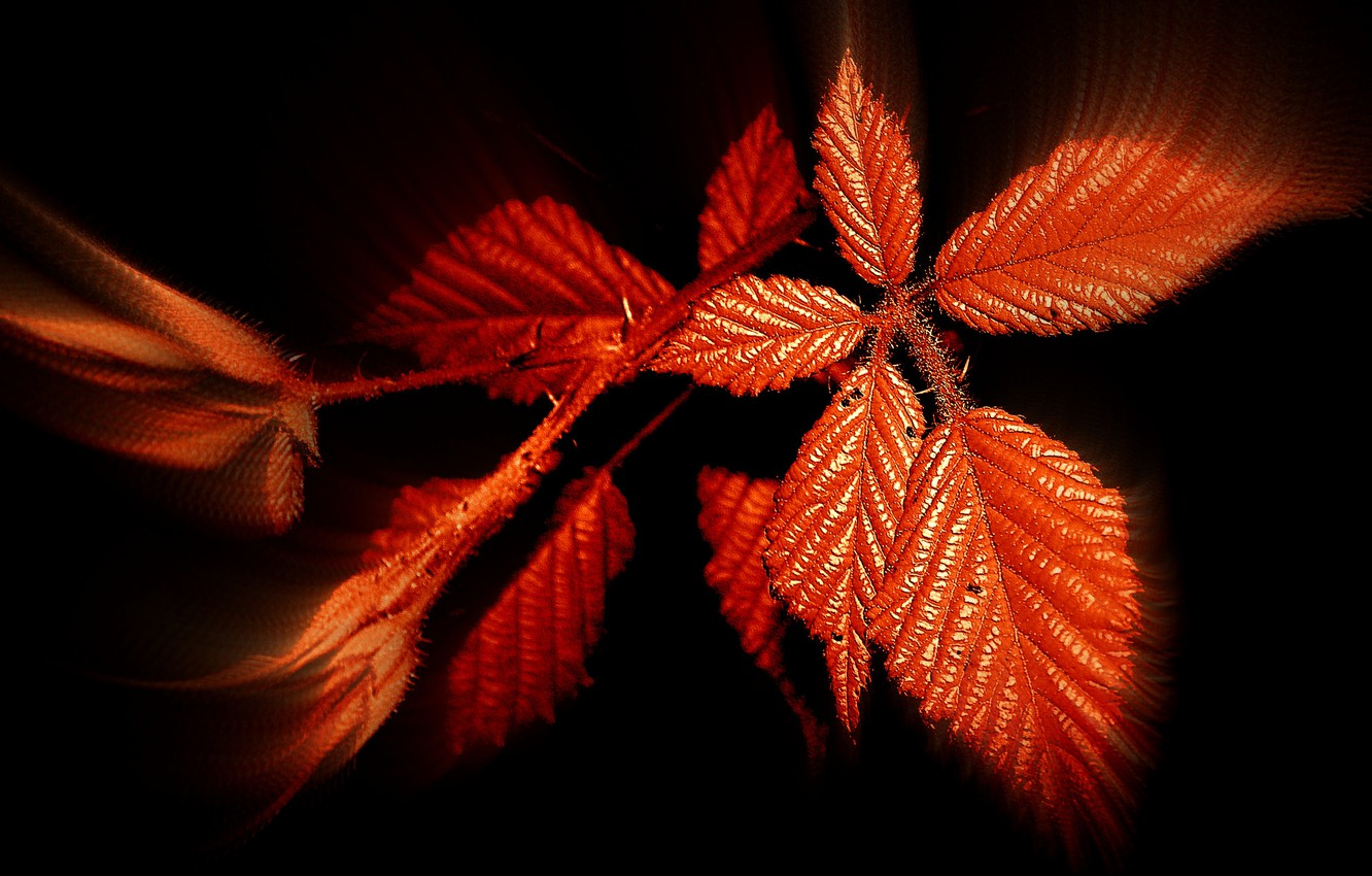 Photo wallpaper autumn, leaves, background, color