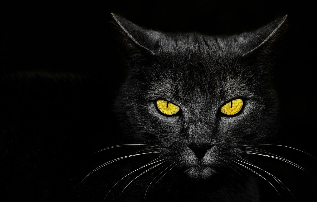 Photo wallpaper eyes, background, Monster Kill, black cat