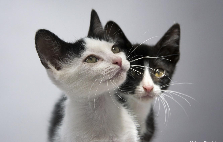 Photo wallpaper kittens, kids, a couple