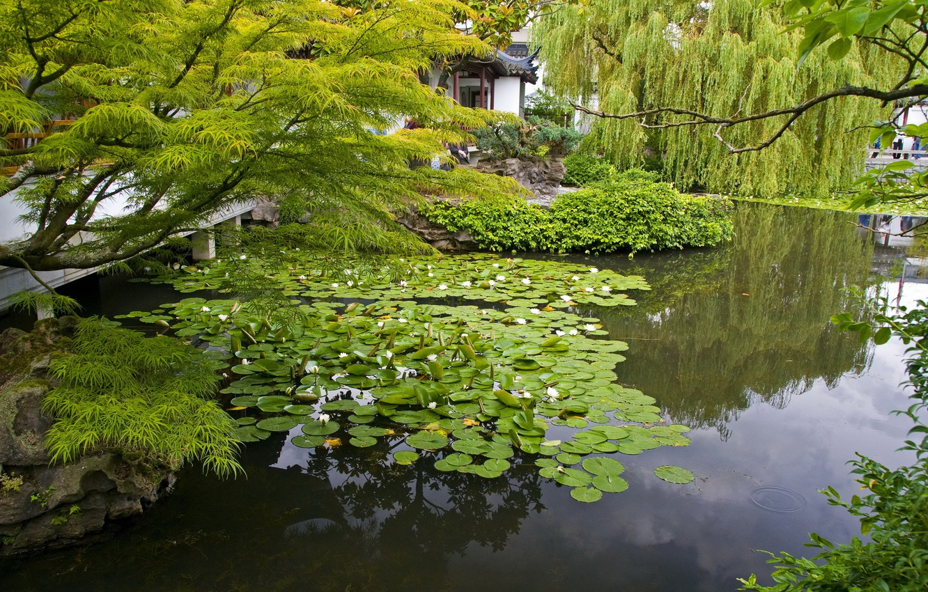 Photo wallpaper branches, nature, pond, photo, garden, water lilies