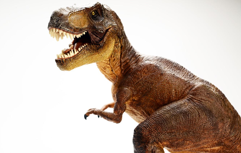 Photo wallpaper realism, details, dinosaur, toy doll