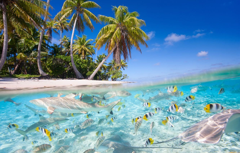Photo wallpaper sea, beach, fish, nature, tropics, palm trees, sharks