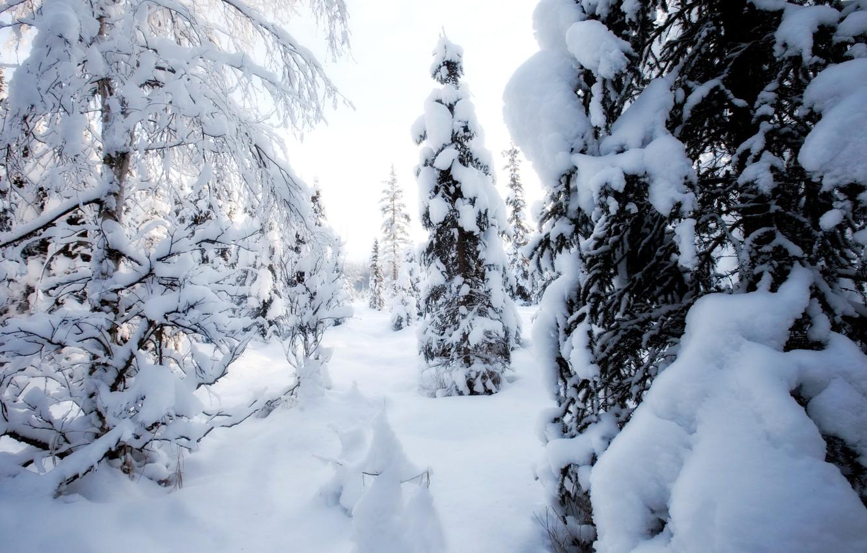Photo wallpaper winter, snow, trees, day