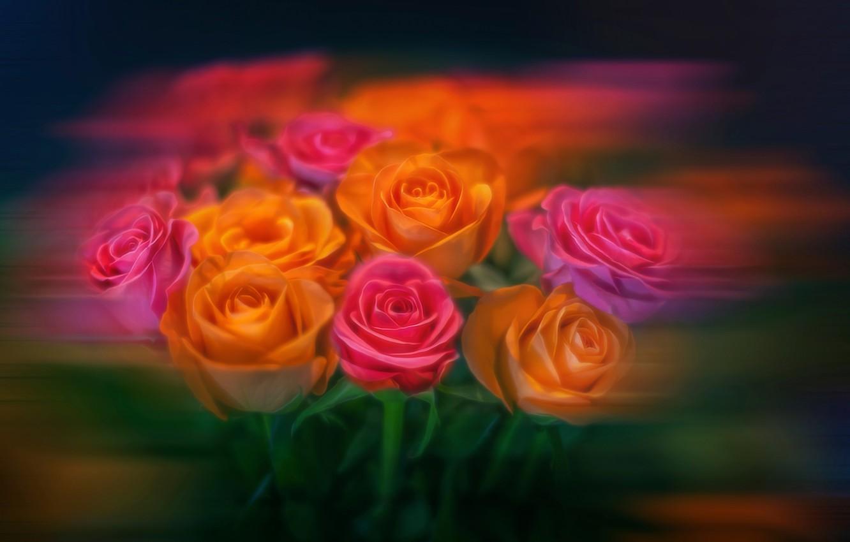 Photo wallpaper flowers, roses, treatment, bouquet, blur