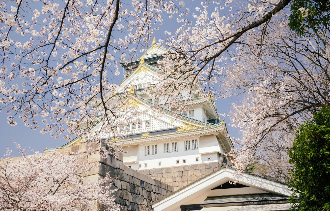 Photo wallpaper trees, branches, cherry, castle, spring, Japan, Sakura, Japan, flowering, Osaka, Osaka, Osaka Castle, Osaka Castle …