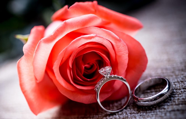 Photo wallpaper flower, rose, ring, red, rose, ring, wedding