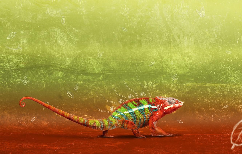 Photo wallpaper design, chameleon, gradient