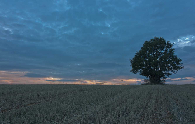 Photo wallpaper field, tree, the evening